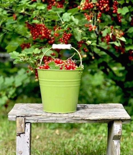 fruits-rouge-couleur-symbolique